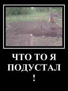 mydem_2.jpg