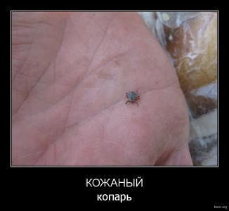 demotivator_986446-2018.02.02-12.23.11-bomz.org-demotivator_kojaniyyi_kopar.jpg
