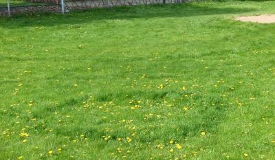 трава.jpg